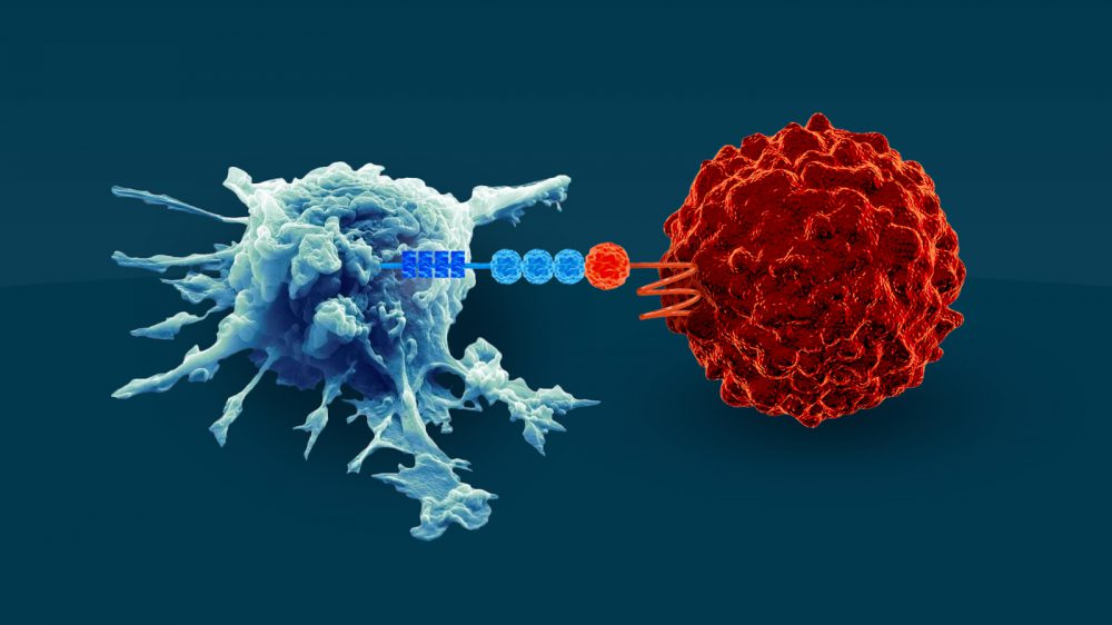 CD47 prevents tumor cell from phagocytosis by macrophage